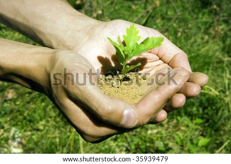 Sprout of an oak tree in man's hands