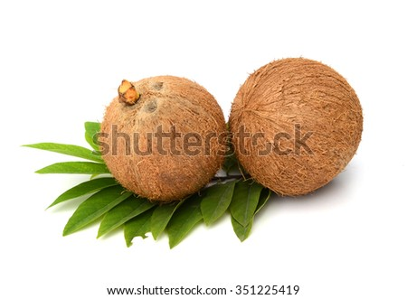 Sprout of coconut tree with green tender leafs and pile of brown dry ripe and old coconuts on the ground Kerala India - stock photo