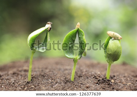 Sprout of the cucumber - stock photo