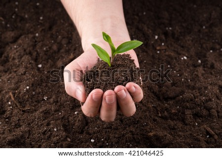 Sprout on top of bunch  of good soil in one hand on ground background - stock photo