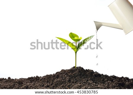 Sprout watered from a watering can isolated on white background - stock photo