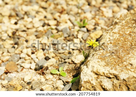 Sprout with flower in garden - stock photo