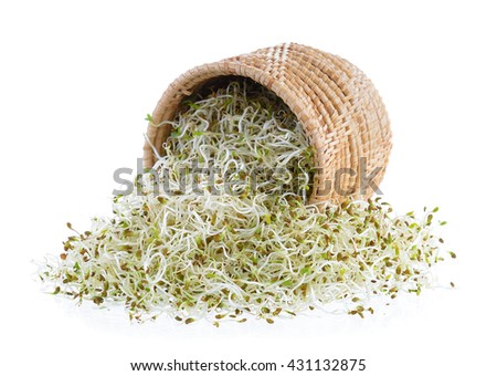 Sprouted alfalfa seeds in basket on a white background - stock photo