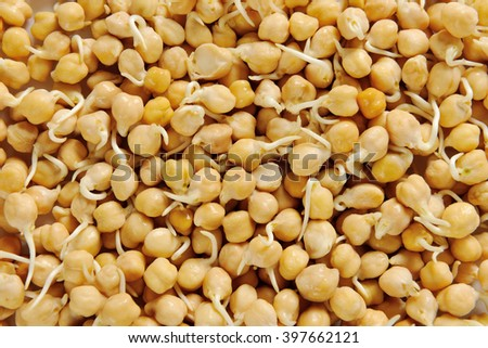 Sprouted chick peas - full frame