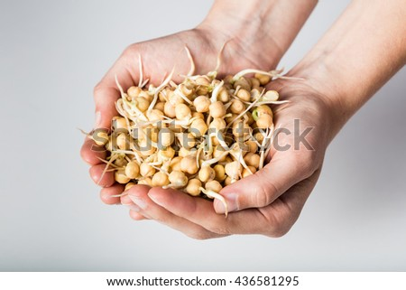 Sprouted chickpeas in woman hands