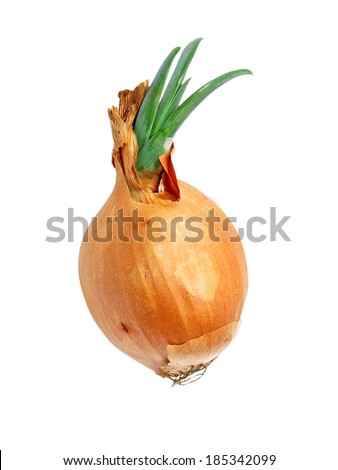 Sprouted onion isolated on white background. - stock photo