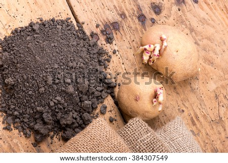 Sprouted potatoes on an old wooden rustic table