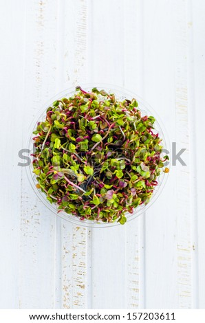sprouted radish seeds in a plastic container - stock photo