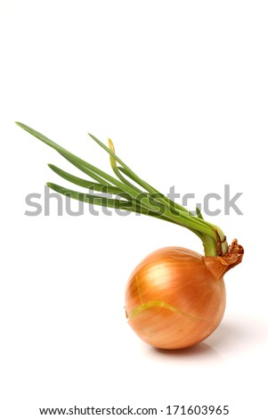 Sprouting onion isolated on a white background  - stock photo