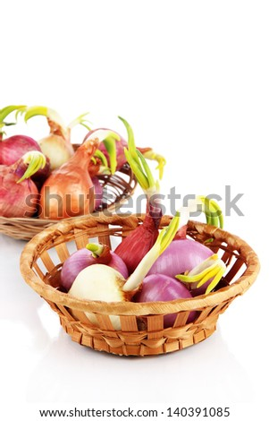 Sprouting onions in basket isolated on white - stock photo