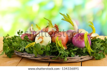 Sprouting onions on board with herbs on nature background