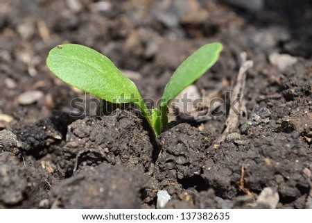 sprouting plant in soil