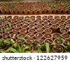 Sprouting plants in a greenhouse - stock photo