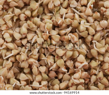 sprouts and a very useful green buckwheat - stock photo