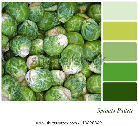 Sprouts background colour palette with complimentary swatches. - stock photo