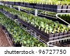 Sprouts for sale - stock photo