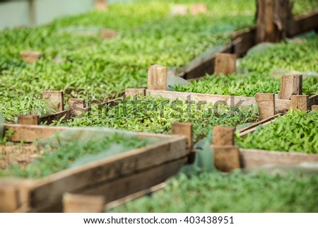 Sprouts greenhouse in boxes - stock photo