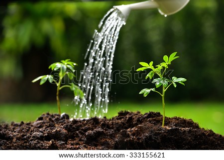 Sprouts watered from a watering can( focus on right plant ) - stock photo