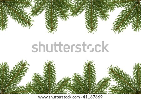 Spruce border over white with space for your text.