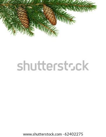 Spruce branch - stock photo
