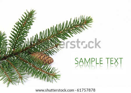 Spruce branch over white background - stock photo