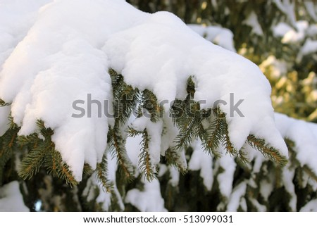 Spruce branch under the thick snow