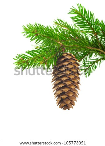 Spruce branch with cone on a white background - stock photo