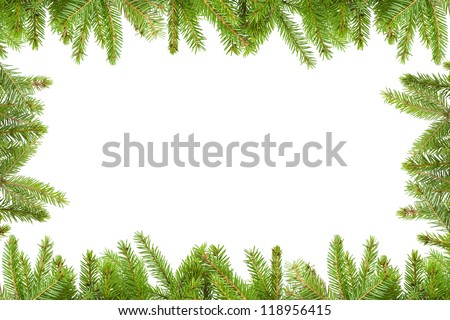 Spruce branches  on a white background - stock photo
