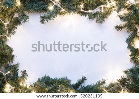 Spruce branches on blank background