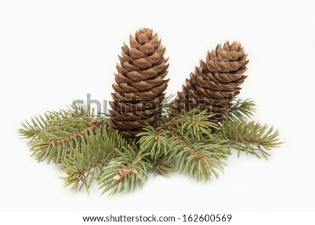 Spruce cones on a spruce branch, Christmas decorations. - stock photo