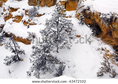 Spruce covered with fresh snow in mountain canyon