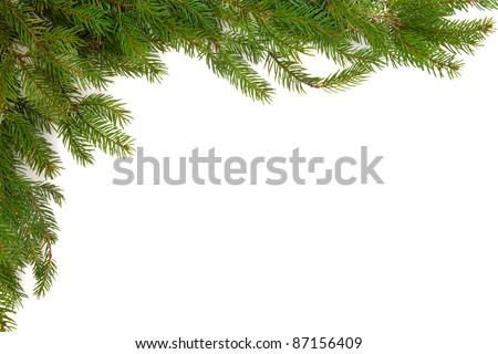 Spruce pine border isolated over white background. Pinu glabra - stock photo