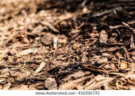 spruce sawdust  - stock photo