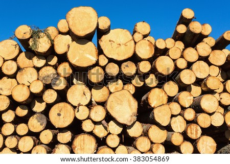 Spruce stack storage in the forest - stock photo