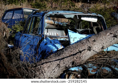 Spruce tree fall on old, abandoned car in Southern Finland.