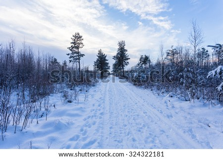 Spruce Tree Forest Covered by Snow in Winter Landscape - stock photo