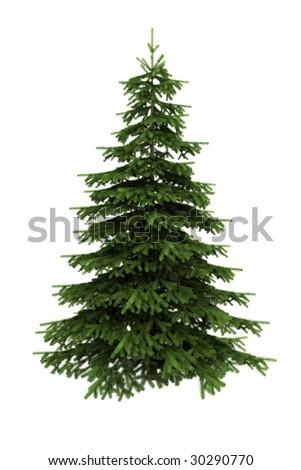 spruce tree isolated on white background - White Spruce Christmas Tree