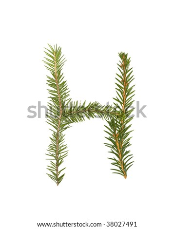 Spruce twigs forming the letter 'H' isolated on white - stock photo