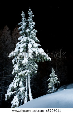 spruces in the snow at night - stock photo