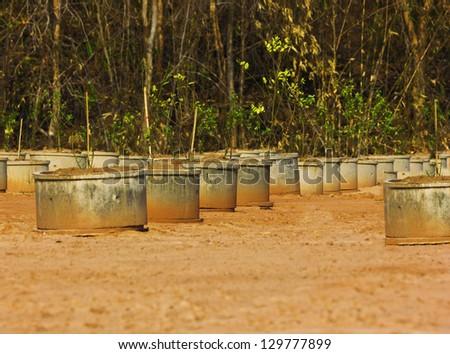 square concrete trees  pot exposing isolated - stock photo