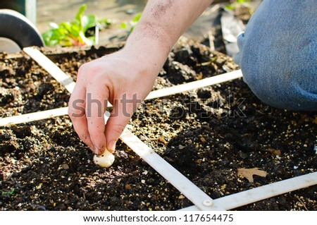 Square foot gardens are are great way for people to grow their own organic vegetables in a very compact space. - stock photo