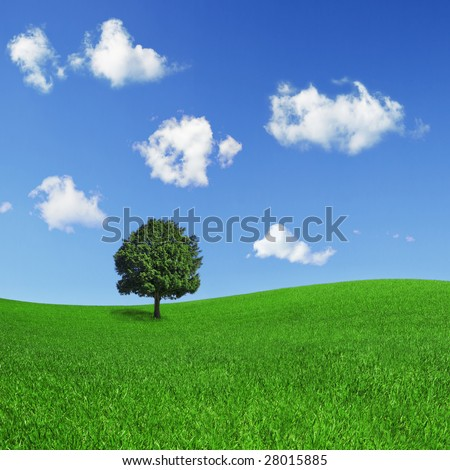 Square format of a lonely tree on a green field, on a clear blue sky with beautiful clouds.