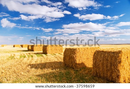 Square hay bales - stock photo