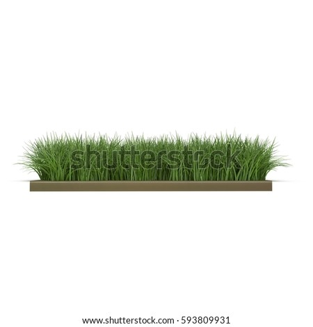Square of Ryegrass Grass field over white. Side view. 3D illustration