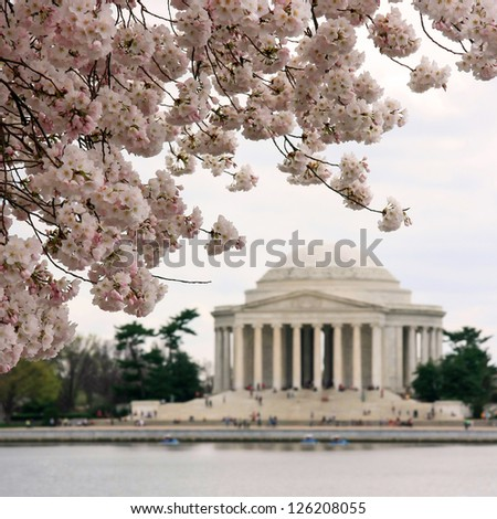 Square shot of cherry blossoms and Jefferson Memorial in blurred background - stock photo