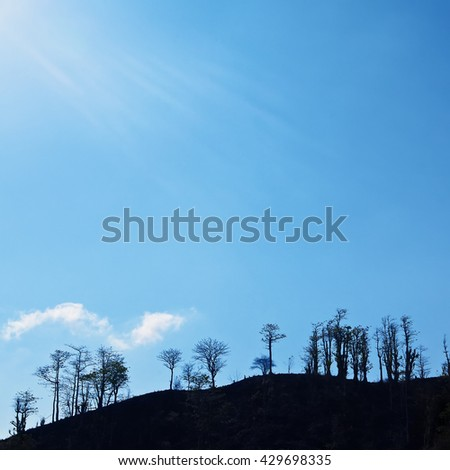 Square vintage blue background of dramatic sky with white sun rays and black silhouette of trees on hill. Summer nature, tropical landscapes with dramatic light at hot weather, treetop skyline.  - stock photo