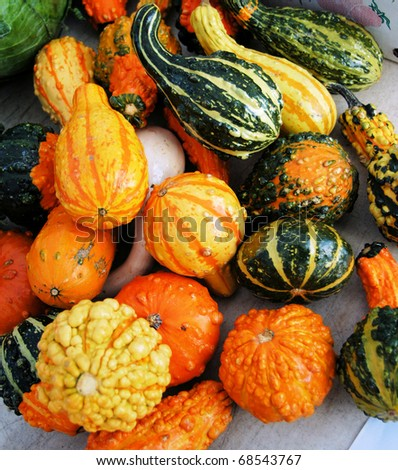 Squash for sale at the market. - stock photo