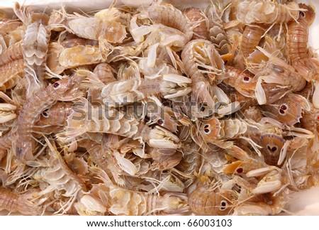 Squilla mantis shrimp, mediterranean sea crustacean in fish market - stock photo