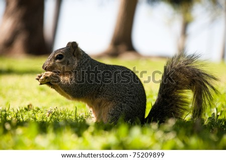 squirell in the forest - stock photo