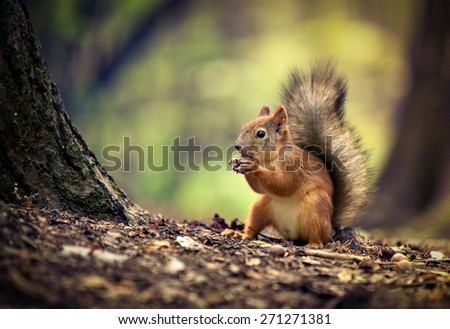 Squirrel and a nut - stock photo